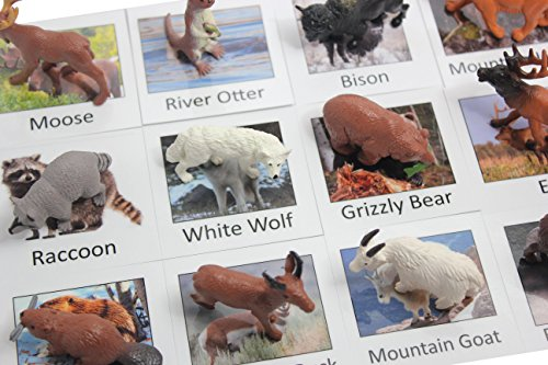 [Montessori Animal Match - Miniature North American Wildlife Animal Toy Figurines with Matching Cards - 2 Part Cards. Montessori learning toy, language materials Busy Bag] (Animals That Start With The Letter A)