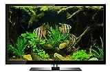 Aquarium DVD-Aquariums of the World with 12 Fish Tanks in HD