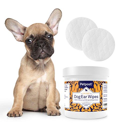 Treating Dog Ear Infections Antibiotics