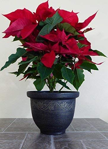 Decorative Plastic Flower Pot for Indoor and Outdoor Use