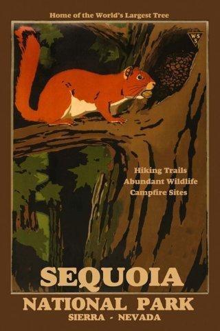 - CANVAS Squirrel Nest Sequoia Worlds Largest Tree National Park Sierra Nevada 20