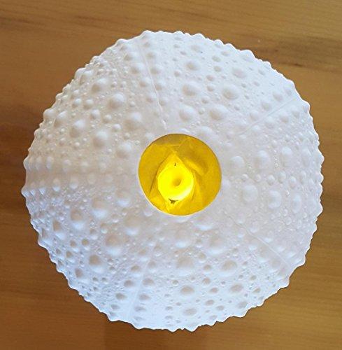 "UPC 605033041107, Candle Tea Light Lantern ""Sea Urchin"""