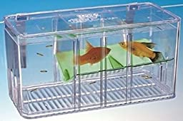 Penn Plax 5-way Divider Isolation Breeding Baby Fish Tank-breeder, Nursery & Display Tank