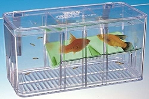 Penn plax 5 way divider isolation breeding baby fish tank for Fish tank divider