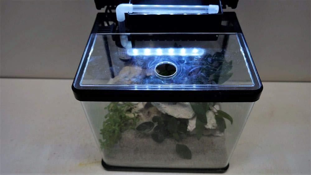 Nano Acuario Laguna en negro Incluye Decoración - acuario Plantas: Amazon.es: Productos para mascotas