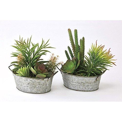 Time Concept Decorative Faux Cacti & Succulents - Large, Set