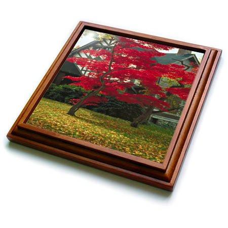 3dRose TDSwhite - Miscellaneous Photography - Pretty Foliage Tudor Home - 8x8 Trivet with 6x6 ceramic tile (trv_285426_1) ()