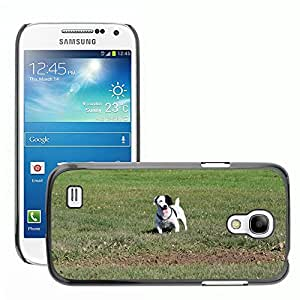 hello-mobile Etui Housse Coque de Protection Cover Rigide pour // M00137951 Jack Russell Terrier Jack Russell // Samsung Galaxy S4 Mini i9190
