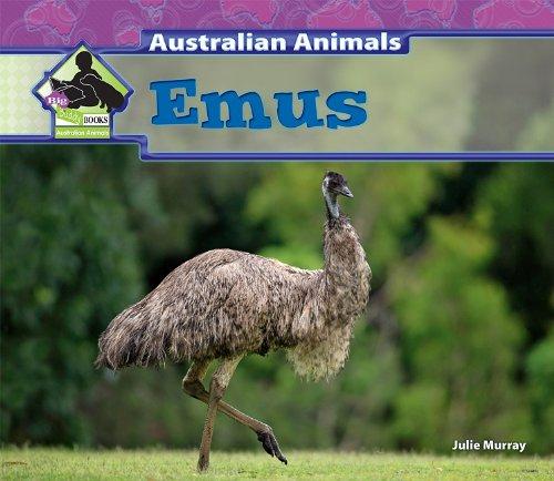 Emus (Big Buddy Books: Australian Animals (Library))