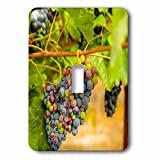 3dRose Danita Delimont - Vineyards - Usa, Washington State, Yakima Valley. Syrah grapes. - Light Switch Covers - single toggle switch (lsp_260521_1)