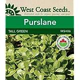 Purslane Seeds - Tall Green Certified Organic (approx. 1250 seeds)