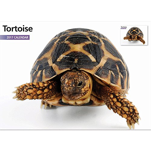Magnet & Steel 2017 Tortoise Calendar, A4 Wall - Australian Tortoise