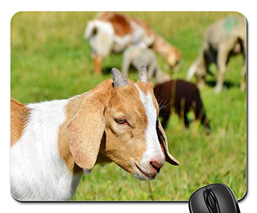 Mouse Pads - Goat Prima Donna Geiss Little Kids Pasture Meadow 8 ()
