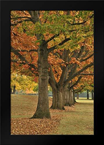 - USA, Oregon, Portland Red Oaks at Fernhill Park Framed Art Print by Terrill, Steve
