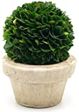 """Serene Spaces Living Preserved Boxwood Ball with Small Pot – Natural Indoor Greenery, Simple Care, 5.5""""x4"""""""