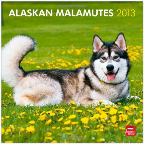 Alaskan Malamutes 2013 - Original BrownTrout-Kalender