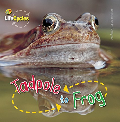 Download Tadpole to Frog (LifeCycles) pdf epub