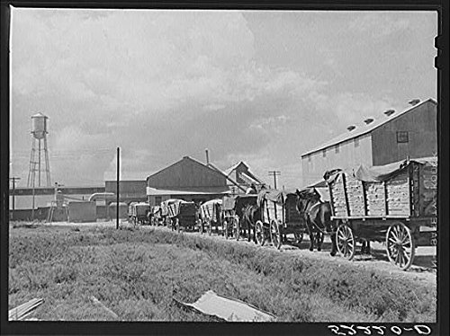 HistoricalFindings Photo: Delta & Pine Land Company of Mississippi,MS,Farm Security Administration,FSA,4 (Delta & Pine Land Company Of Mississippi)