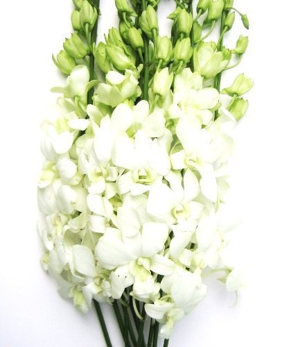 Fresh Cut Flowers - Dendrobium Orchids White by eflowerwholesale