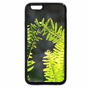 iPhone 6S Plus Case, iPhone 6 Plus Case, Fern leaves in the sun