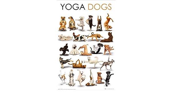 Amazon.com: Yoga Dogs Poster (61x91cm) Picture Print New Art ...