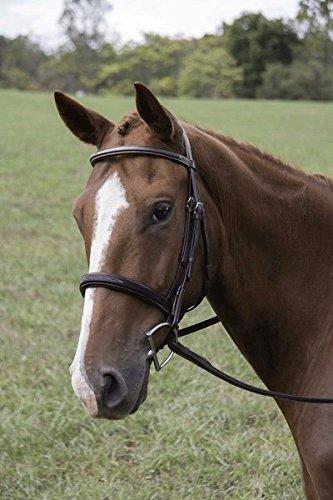 Veritas Fancy RaisedハンターBridle ブラウン Fancy B01DJZI248 Parent Veritas ブラウン Horse, レース専門店BerryLace:c172ea1e --- sharoshka.org