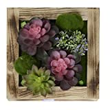 KAIMO Wall Hangings Artificial Succulents Fake Flowers Greenery Planter in Wood Frame Vase for Home Decoration, 11.8111.81 in