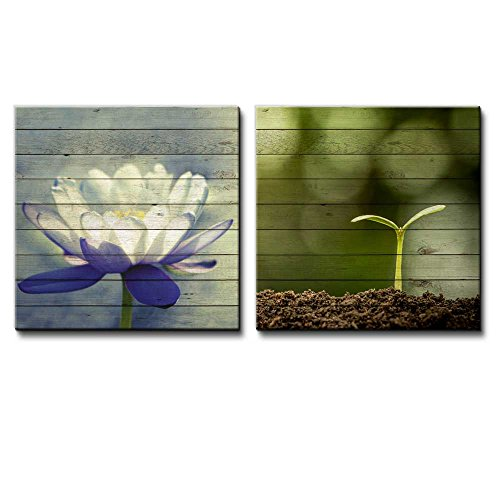 White Water Lily Along with a Small Plant on Blooming on a Pile of Soil Over Wooden Panels
