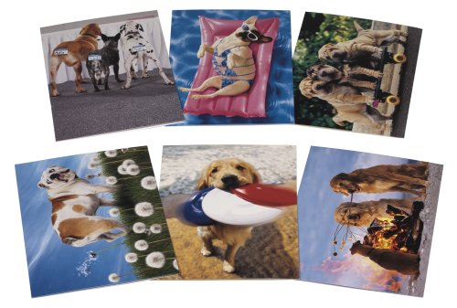 (Avanti Birthday Card Collection, Paws-itively Fabulous, 12-Count (200071))