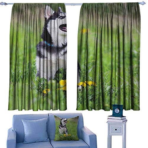 ParadiseDecor Alaskan Malamute Kitchen Curtains Little Puppy Playing on Green Grass Spring Meadow Natural Life Outdoors,Backout Draperies for Chidren Bedroom,W42 x L63 Inch
