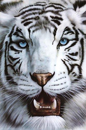 White Siberian Tiger - Nature Poster