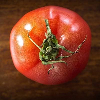 Tomato Garden Seeds - Brandywine Pink - Non-GMO, Heirloom Vegetable Gardening Seed