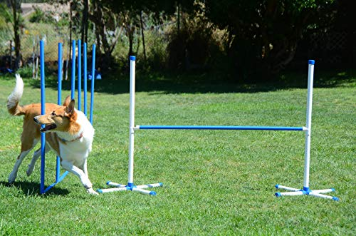 Triple A Dogs Combo 1 Dog Agility Jump/6 Dog Agility Weave Poles Buy Combo and Save, Dog Training, Dog Jumps, Dog Hurdles, Agility Equipment,