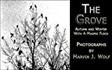 The Grove: Autumn and Winter With a Magpie Flock