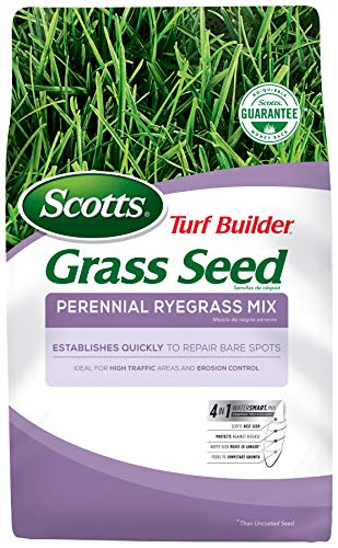 Scotts Turf Builder Grass Seed Perennial Ryegrass Mix, 7.lb. - Full Sun and Light Shade - Quickly Repairs Bare Spots, Ideal for High Traffic Areas and Erosion Control - Seeds up to 2,900 sq. ft.