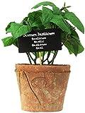 Esschert Design Artificial Herb Plant, Basil, Large