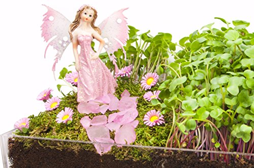 Window Garden Edible Fairy Garden Kit with an Enchanting Fairytale and Accessories - Pink (Fairy Tale Couples)