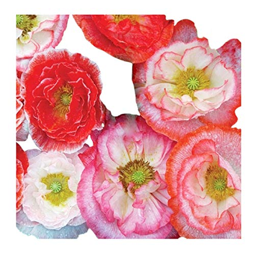 50,000 Double Shirley Poppies Seeds: Pink and Red Pastel Poppy Seeds - Non GMO and Neonicotinoid Seed