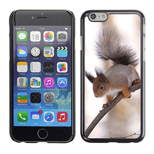 "Premio Sottile Slim Cassa Custodia Case Cover Shell // F00015817 Écureuil // Apple iPhone 6 6S 6G 4.7"""