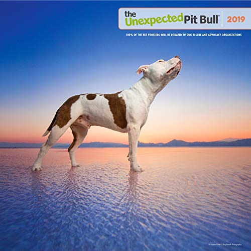 The Unexpected Pit Bull 2019 Calendar