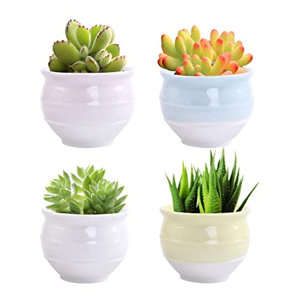 Amazoncom Luckego 326 Inch Ceramic Succulent Pot Cute Cylinder