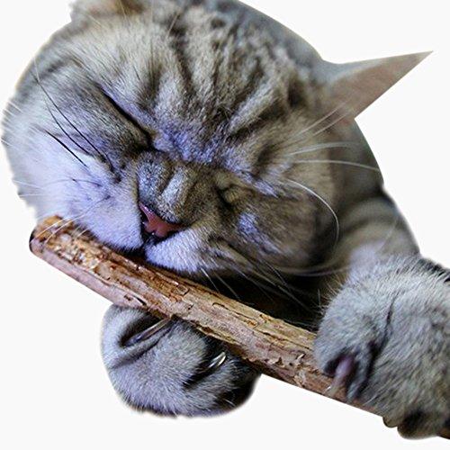 - Pet Cat Kitten Chew Stick Toy Catnip Molar Catnip Chew Sticks Pet Kitten Cleaning Teeth Healthy Care Organic Vine Bully Sticks Ecological Toothbrush Dental Treats Molar Chew Toy (Brown, 10g/Pack)