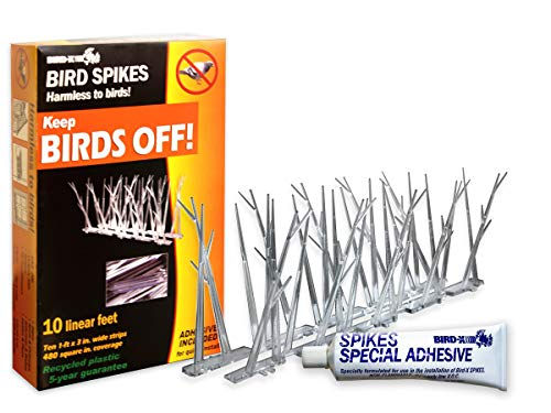 Bird-X Plastic Polycarbonate Bird Spikes Kit with Adhesive Glue, Covers 10 feet (Renewed)