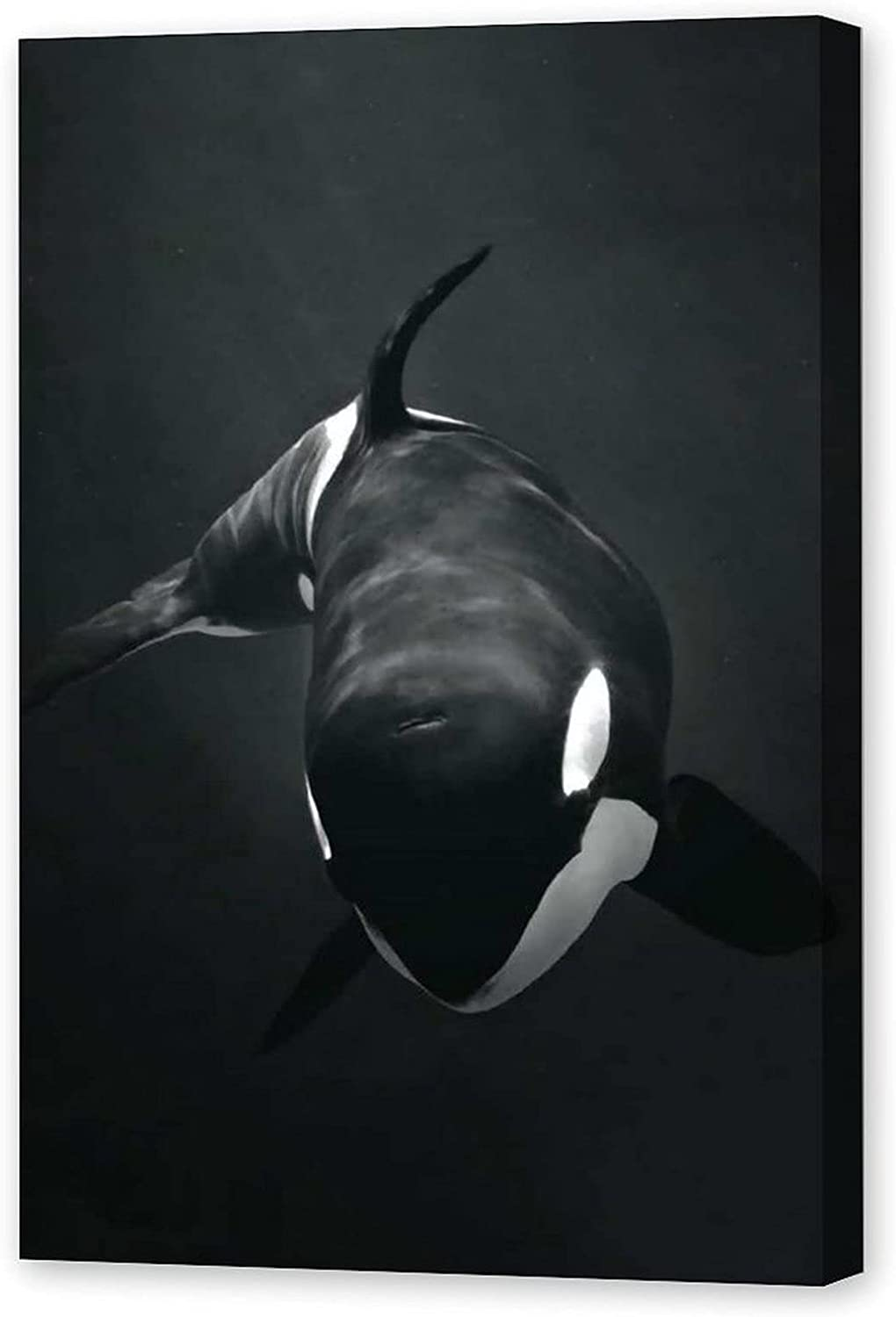 Ocean Wall Decor Killer Whale Orca Sea Underwater Black and White Poster Nice Gift for Kids and Friends 01 Decorative Painting Canvas Wall Art Living Room Posters Bedroom Painting 12x18inch(30x45cm)