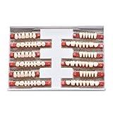 dental resin teeth - 84 Pcs Dental Complete Acrylic Resin Denture False Teeth 3 Sets Synthetic Polymer Resin Denture Teeth 23 A2 Upper + Lower Dental Materials