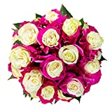 FRESH Tinted Roses| White and Pink| 25 stems (Venus Rose) Magnaflor - XXL Blooms| Bunch| 10-12 days vase Life