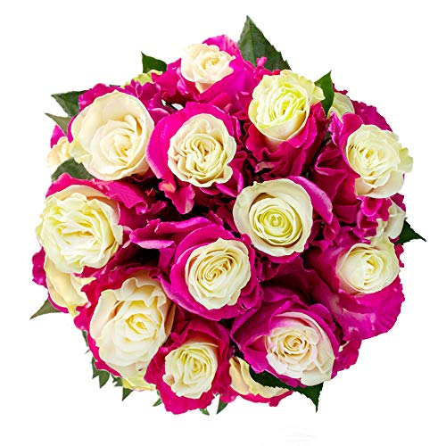 FRESH Tinted Roses| White and Pink| 25 stems (Venus Rose) Magnaflor - XXL Blooms| Bunch| 10-12 days vase Life by Magnaflor - Wholesale Roses & More