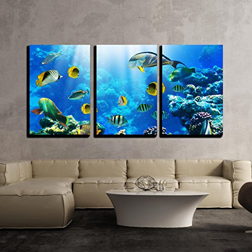 wall26 - 3 Piece Canvas Wall Art - Photo of a Tropical Fish on a Coral Reef - Modern Home Decor Stretched and Framed Ready to Hang - 24