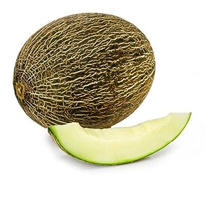 Green Melon Santa Claus Christmas Melon Piel De Sapo Cucurbitaceae Seeds 50 PCS