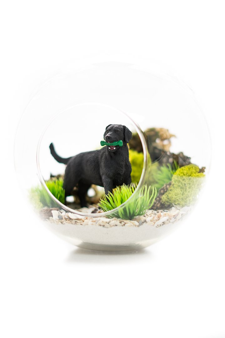 Black Labrador Gift | Terrarium Kit | Black Lab Lovers Terrarium Design Kit | Dog Breed Series | Nautical Crush Trading TM